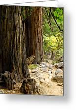 Angel Trail Greeting Card