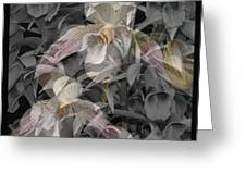Angelic Hosts  The Hooded Nun Orchid Greeting Card
