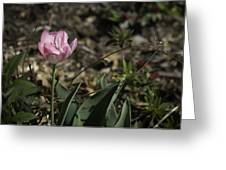 Angelique Peony Tulip Greeting Card