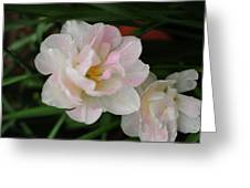 Angelique Tulips Greeting Card by Beverly Cazzell