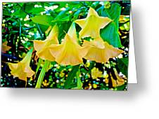 Angel's Trumpets At Pilgrim Place In Claremont-california Greeting Card