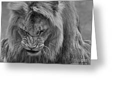 Angola Lion Greeting Card