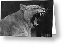 Angola Lioness Greeting Card