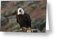 Angry Bald Eagle Greeting Card
