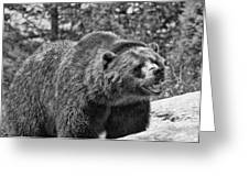 Angry Bear Black And White Greeting Card