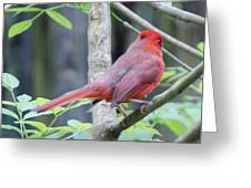Angry Bird Greeting Card by Julie Cameron
