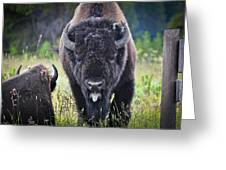 Angry Bison Greeting Card