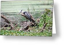 Angry Heron Greeting Card