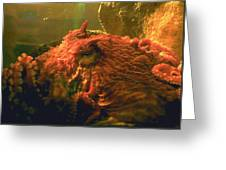 Angry Octopus Greeting Card
