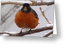 Angry Robin Greeting Card