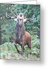 Angry Stag Greeting Card