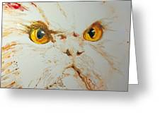 Angry Cat. Greeting Card