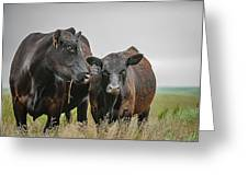 Angus Pair Greeting Card
