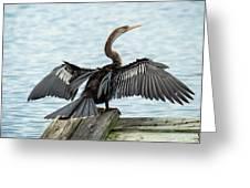 Anhinga Drying Its Wings Greeting Card