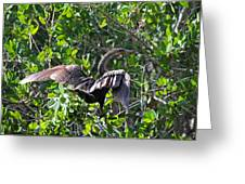 Anhinga In The Sun Greeting Card