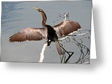 Anhinga Greeting Card