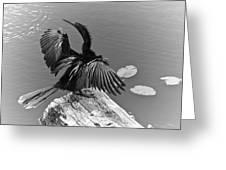 Anhinga On Lake Greeting Card