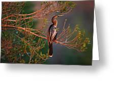 Anhinga Sunset Greeting Card