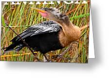 Anhinga The Swimming Bird Greeting Card