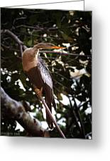 Anhinga Water Fowl Greeting Card