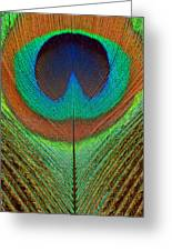 Animal - Bird - Peacock Feather Greeting Card
