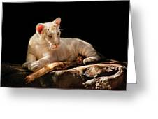 Animal - Cat - A Baby Snow Tiger Greeting Card
