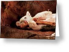Animal - Cat - My Chew Toy Greeting Card