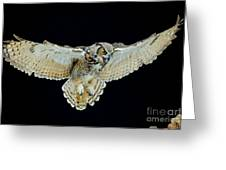 Animal - Bird - Great Horned Owl Wings Spread Greeting Card
