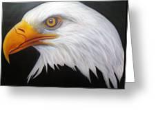 Animal- Eagle Greeting Card