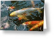 Animal - Fish - Bestow Good Fortune Greeting Card
