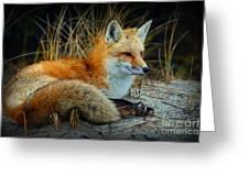 Animal - The Alert Fox  Greeting Card