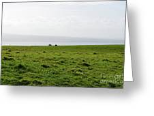 Animals Grazing In A Field Along The Cliffs Of Moher Greeting Card