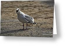 Animated Seagull Greeting Card