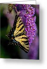 Anise Swallowtail Greeting Card
