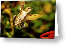 Anna Hummingbird  In Flight 1 Greeting Card