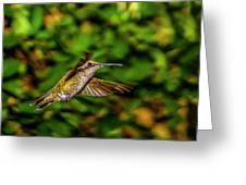 Anna Hummingbird  In Flight 2 Greeting Card