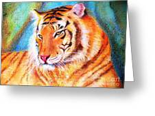 Ano Do Tigre Greeting Card