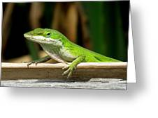 Anole 16 Greeting Card