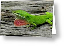 Anole 17 Greeting Card