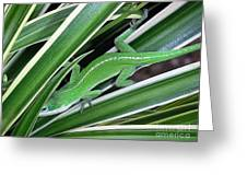 Anole Hiding In Spider Plant Greeting Card by Lucyna A M Green