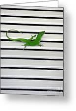 Anole Shuttered Out Greeting Card