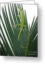 Anole With Palm - Cautious Greeting Card