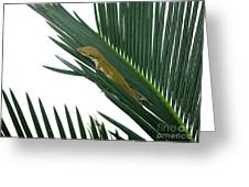 Anole With Palm - Coy Greeting Card