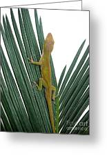 Anole With Palm - Curious Greeting Card