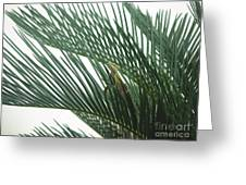 Anole With Palm - Entangled Greeting Card