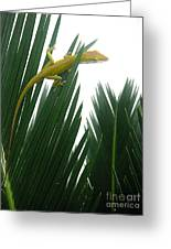 Anole With Palm - Flexible Greeting Card