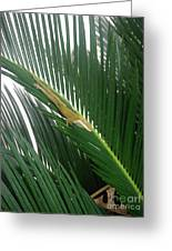 Anole With Palm - Inquisitive Greeting Card
