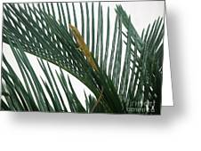 Anole With Palm - Looking Up Greeting Card