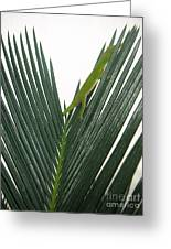 Anole With Palm - Shy Greeting Card