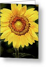 Another Artistic Sunflower Greeting Card